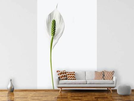 Photo Wallpaper The peace lily