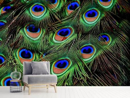 Photo Wallpaper Peacock feathers XXL