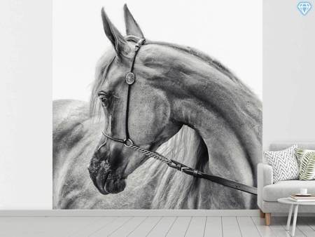Photo Wallpaper The Arabian Horse