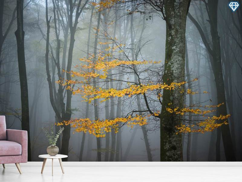 Photo Wallpaper Beech Forest In Autumn