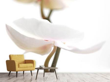 Photo Wallpaper XXL Orchid Flower