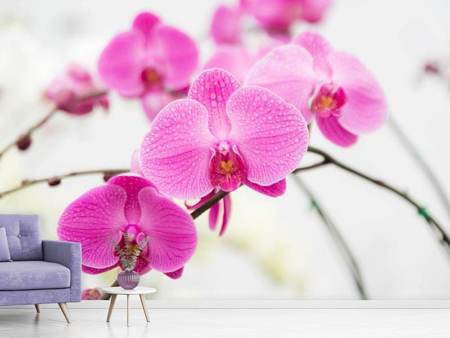 Photo Wallpaper The Symbol Of Orchid