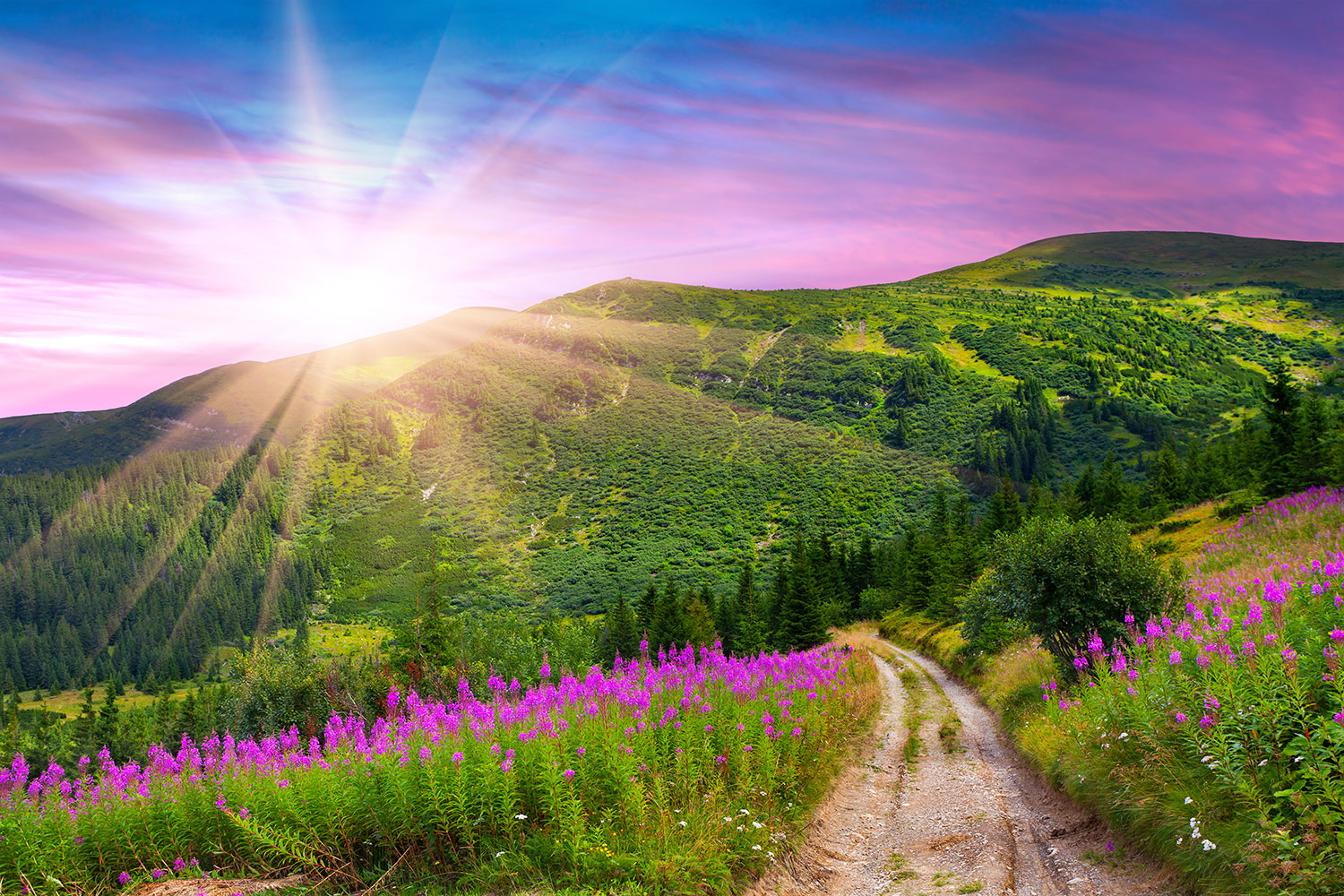 Photo Wallpaper A Summer Landscape At Sunrise