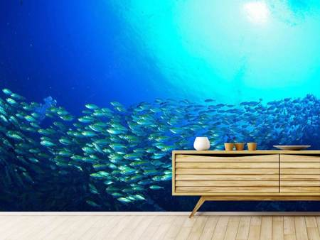Photo Wallpaper Shoal Of Fish